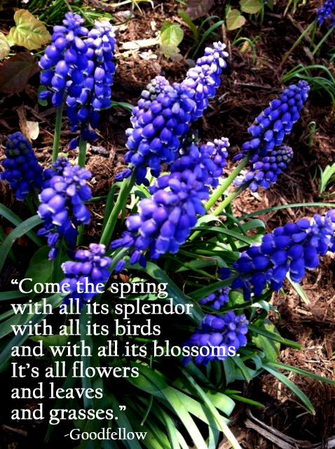 flowers (2) copy